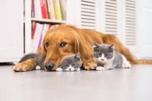 Rolling Meadows family law attorney, custody of pets, pets and divorce, pet custody law, divorcing spouses